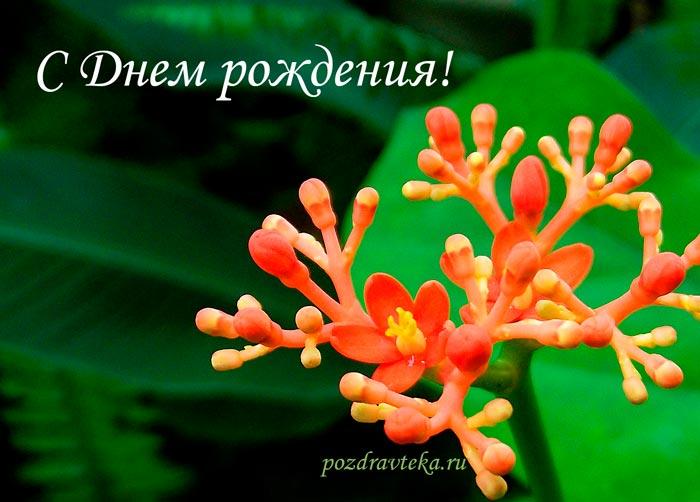 Изображение - Поздравления любимого парня с днем рождения своими словами 361-svoimi-slovami